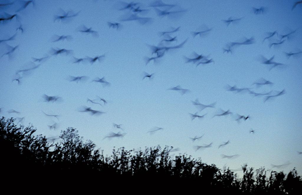 DEE1311Dark_Bats