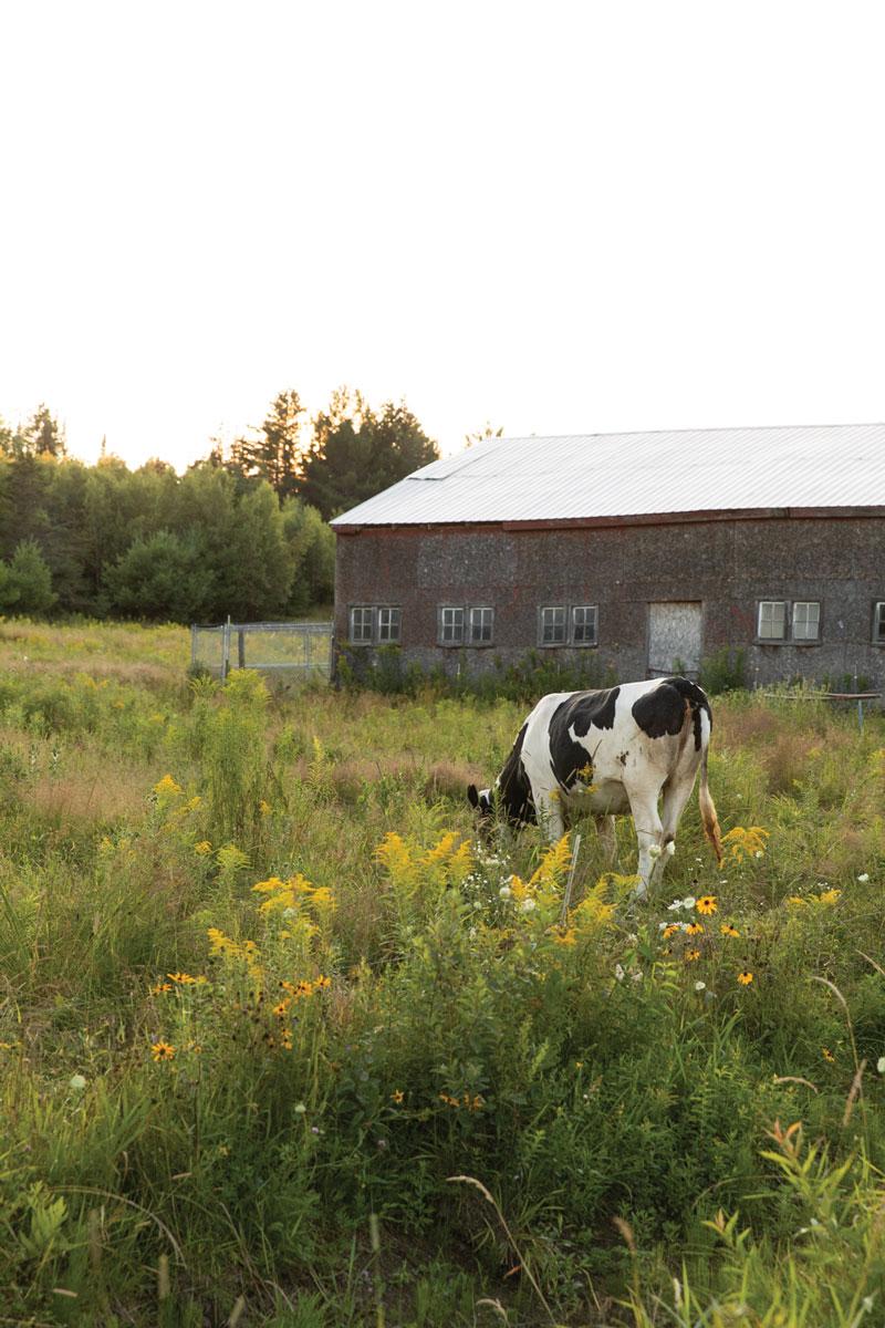 Frederic's farm