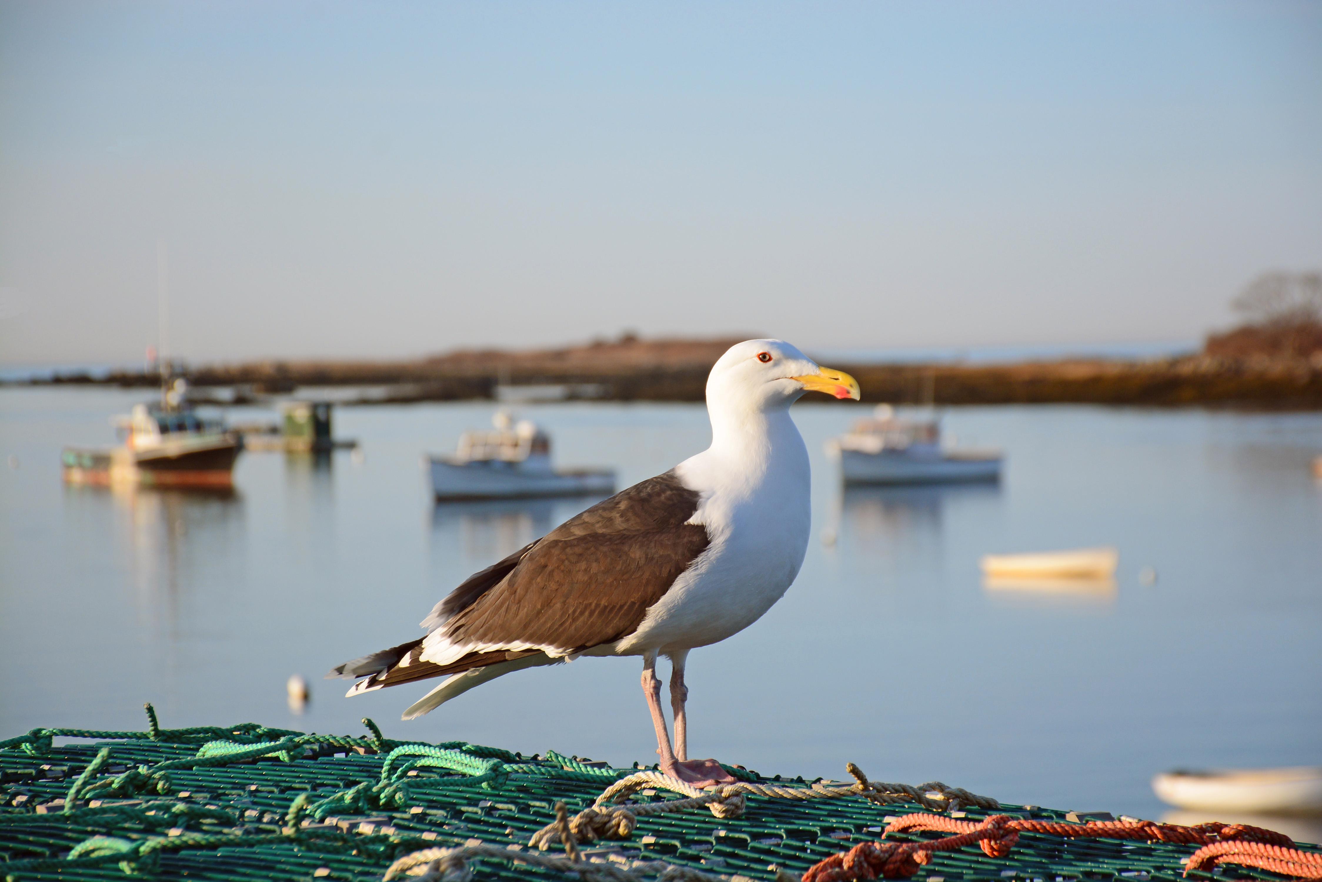 seagull reader essays online
