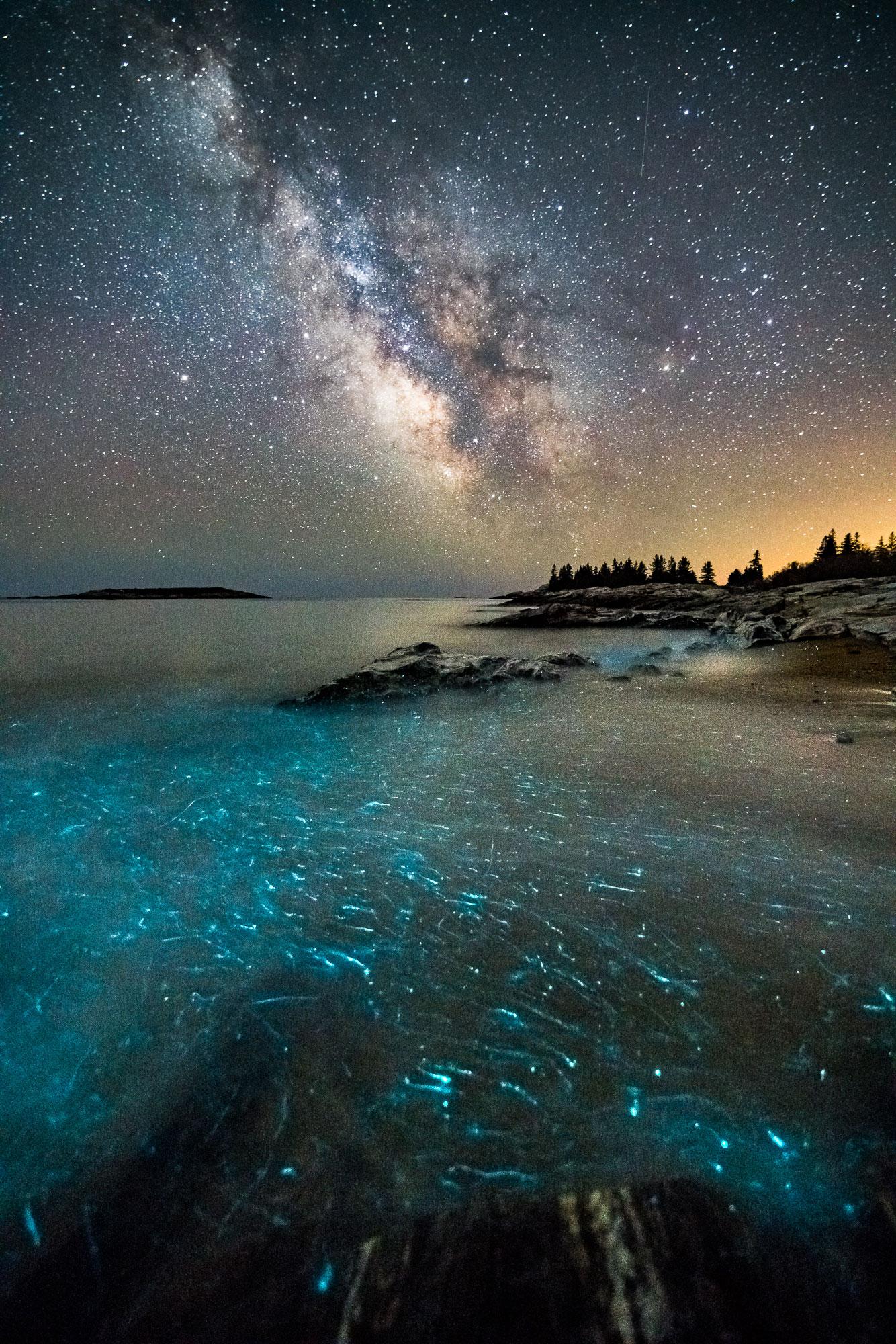 Reid State Park, Bioluminescense