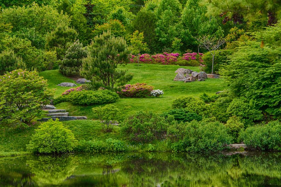 Asticou Gardens azaleas