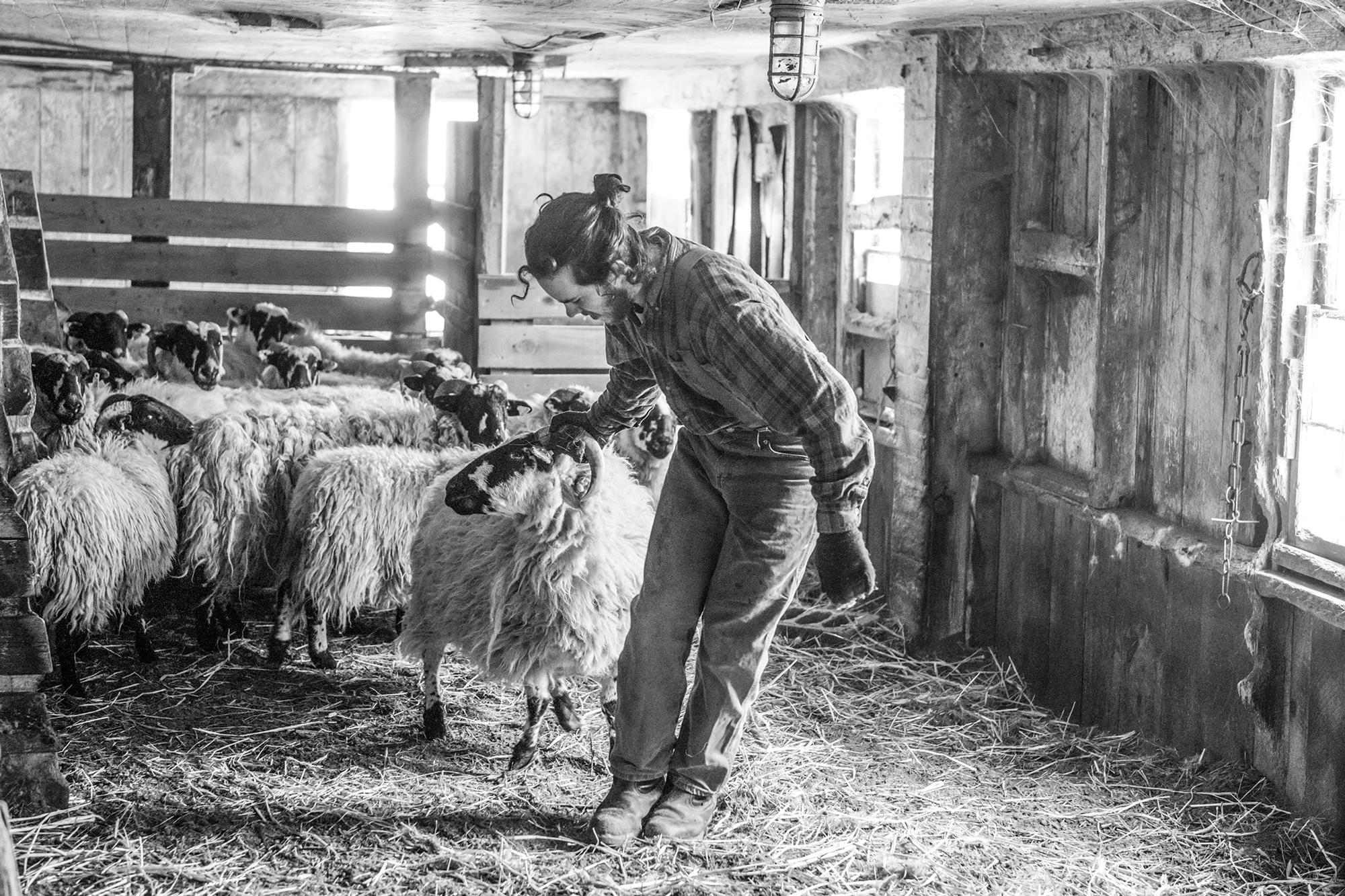 Nina Fuller Sheep