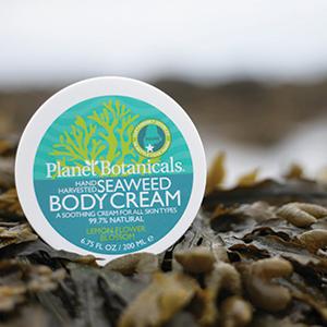 Seaweed Body Cream