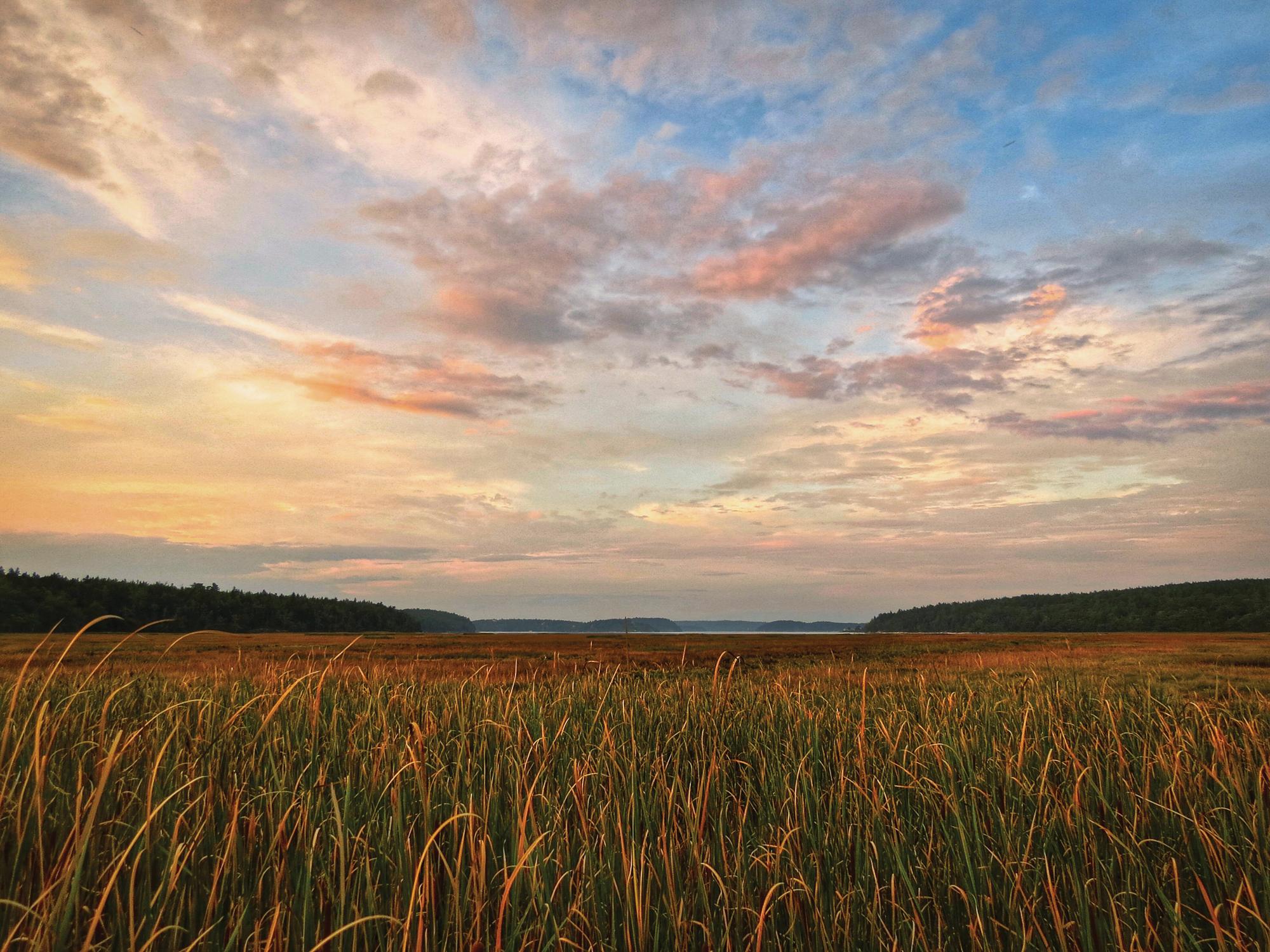 Grasses on the Morse River salt marsh, near Seawall Beach.