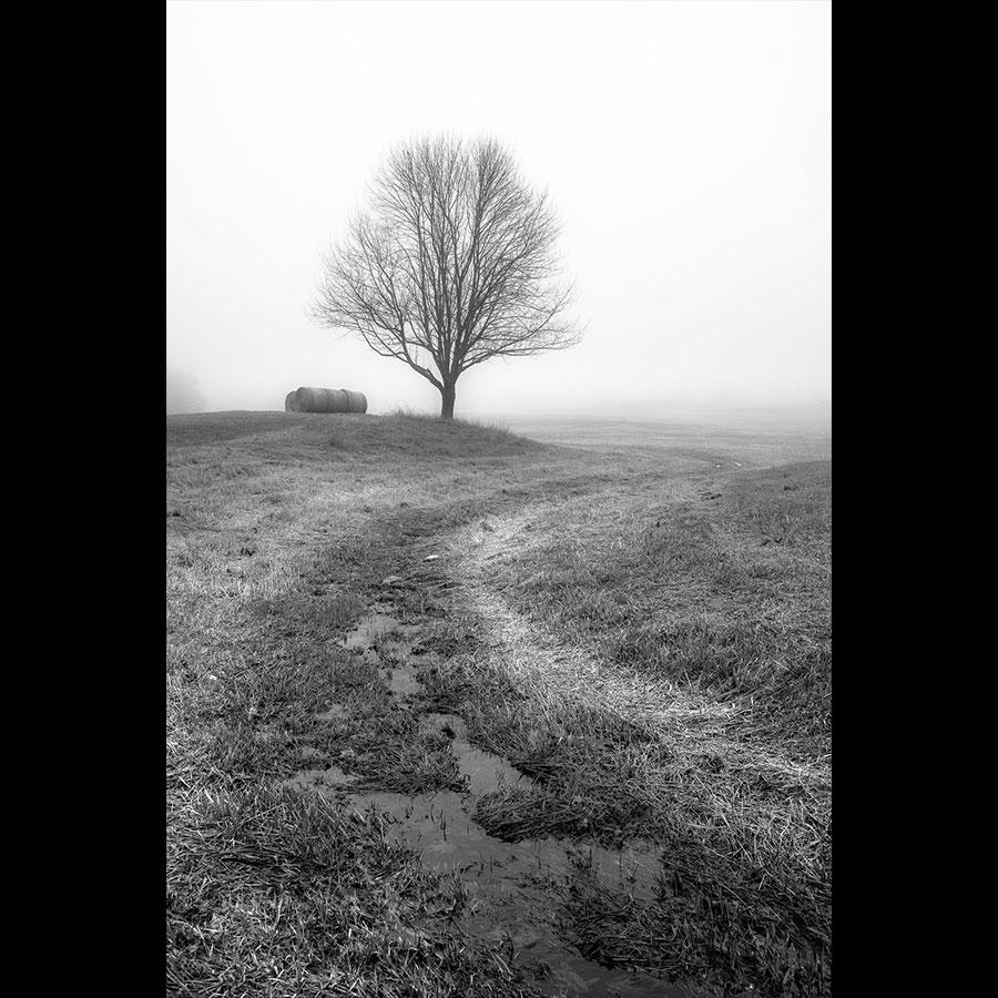 Tree in a Field, Libson