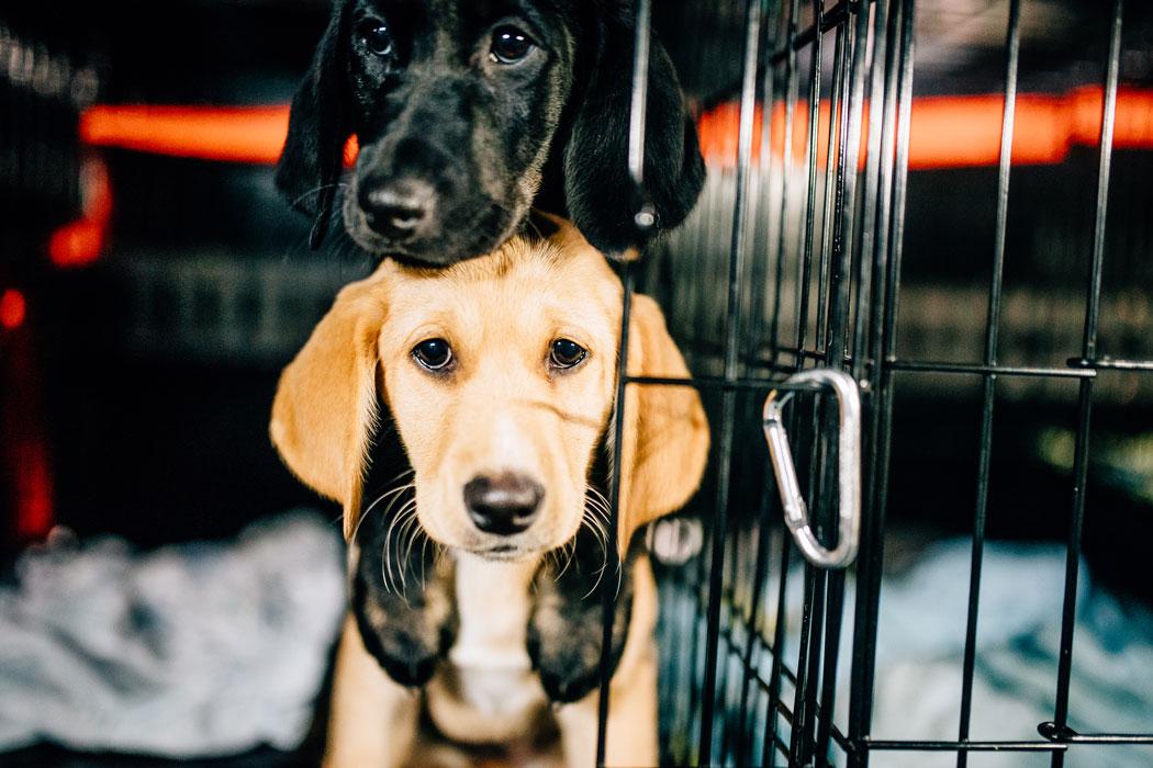 Rescue Dogs in Maine - Homeward Bound   Down East Magazine