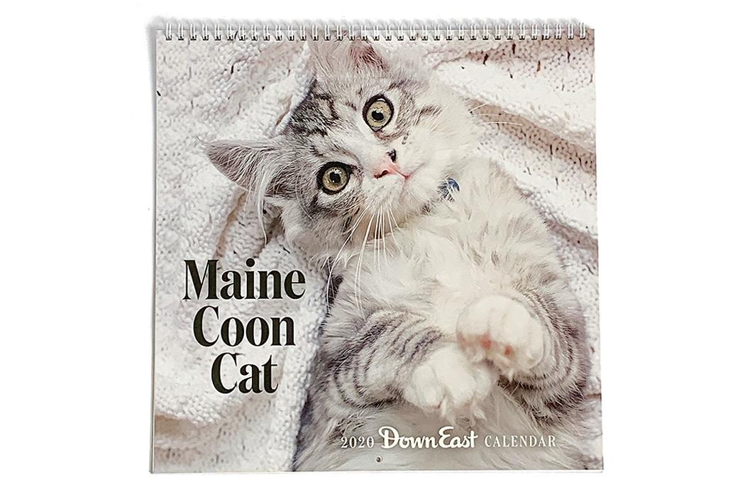 Maine Coon Cat Calendar