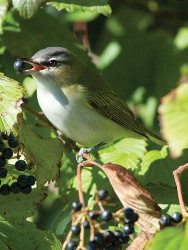 Maine Audubon and native plants