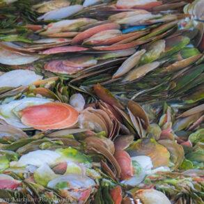 Shells by Karen Kurkjian