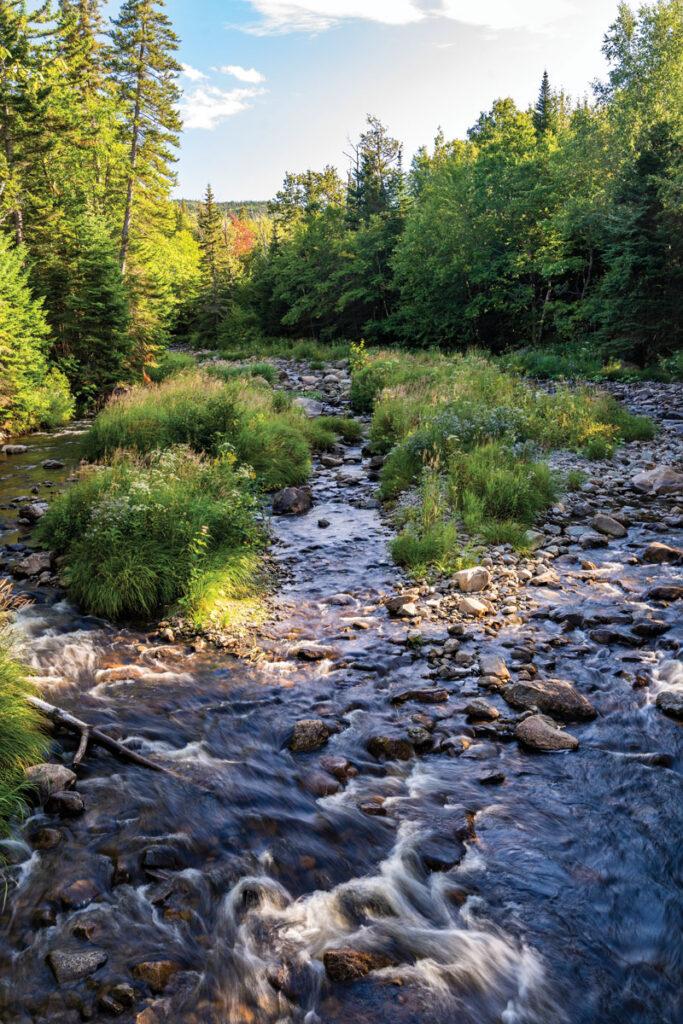 South Branch Moose River