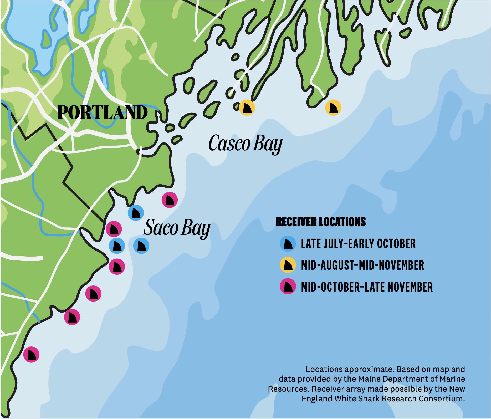Shark Attacks in Maine Were Unthinkable. Until Last Summer.