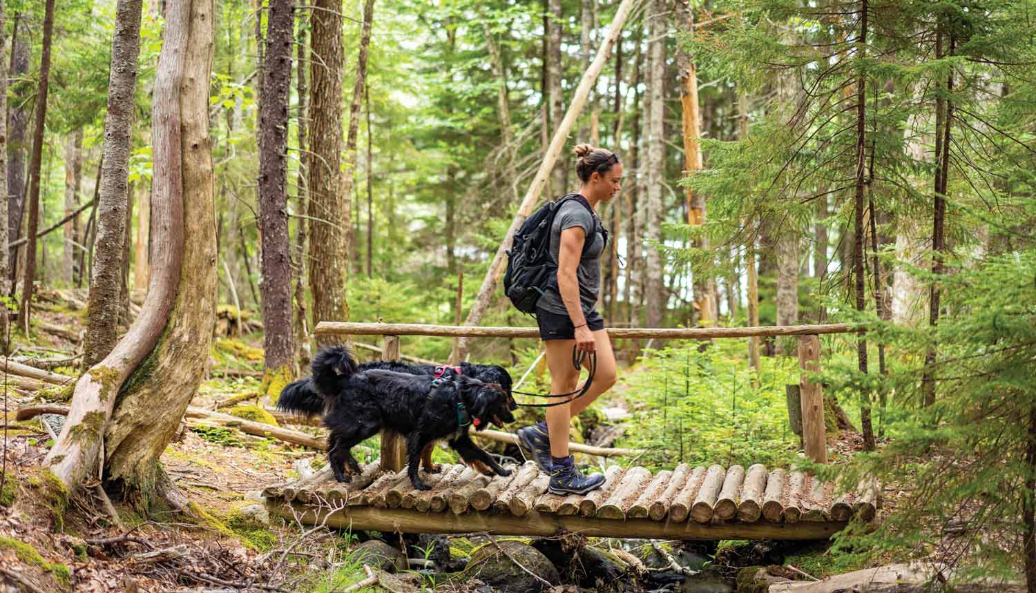 5 Family-Friendly Hiking Trails in Acadia National Park
