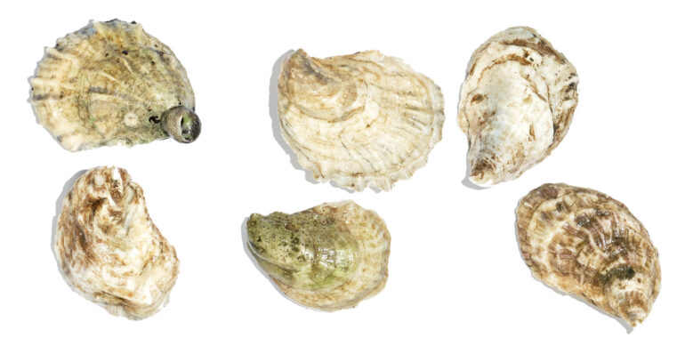 The Maine Oyster Trail Is Back